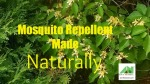 Aim 4 Natural Mosquito Repellent Made Naturally